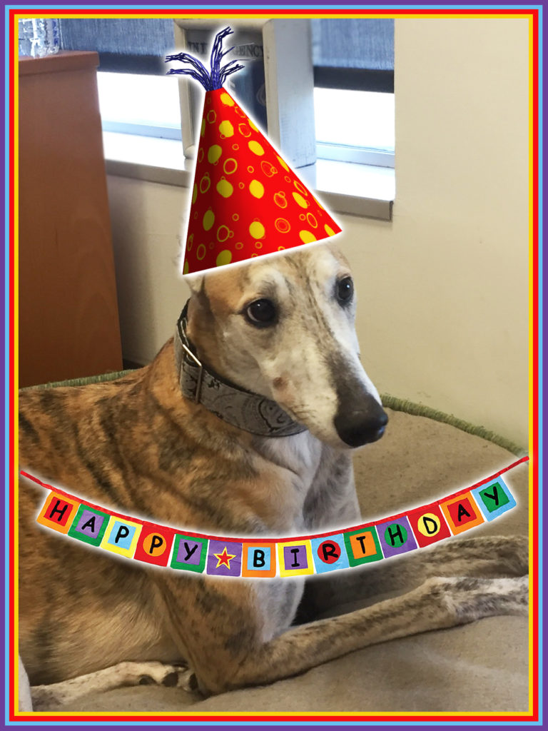 Greyhound Rescue Mascot turns 6