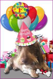 Daschund Mascot Birthday