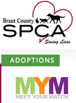 brantford volkswagen supports brant spca adopt one today