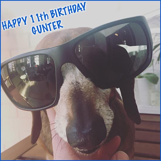 Gunter mascot 11th birthday