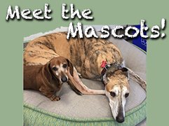 meet our dealership mascots Gunter a daschund Trotzig a greyhound rescue